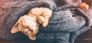 Las mascotas en los seguros de hogar