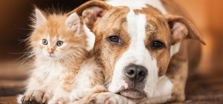 ¿El seguro de hogar cubre a mis mascotas?