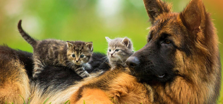 La importancia de una asistencia para mascotas en el hogar