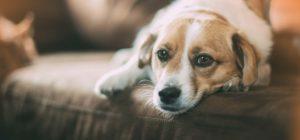 Cinco consejos para proteger a los animales de la pirotecnia